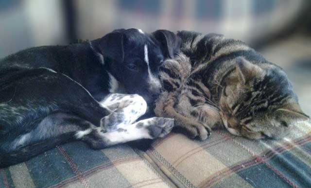 Pets Millie and Baker
