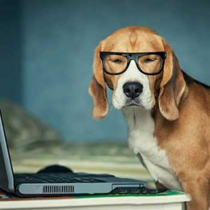 Beagle in glasses making on-line appointment