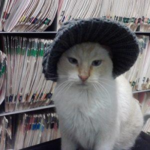 Cat Spice