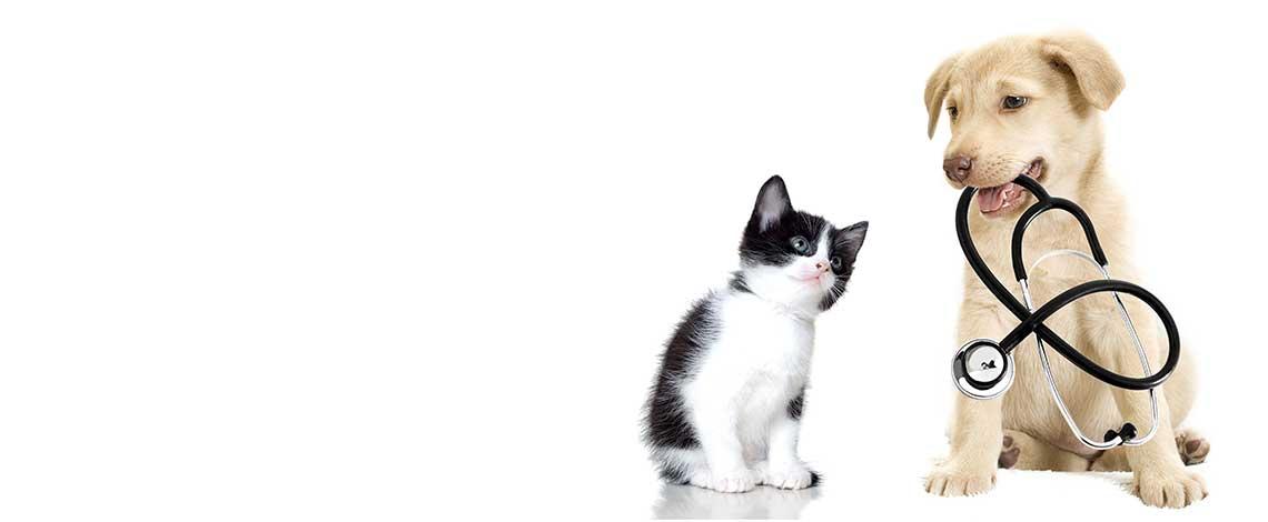 slide2_dog_cat_stethescope