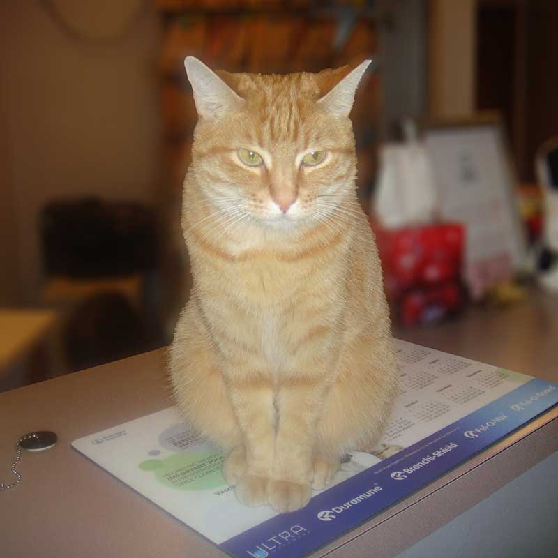 Cat named rusty sitting on calendar